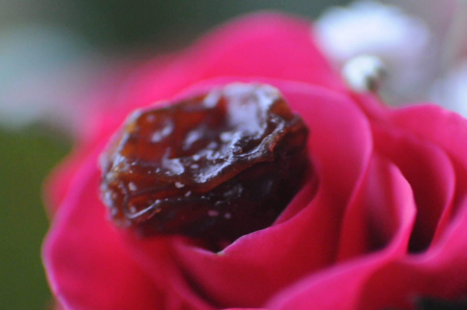 Was ist wohl ein Rosien-Brötchen? Eine Rose, die eine Rosine hervorbringt?